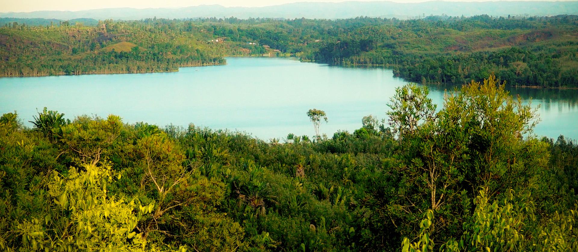 Slide Aroma Forest